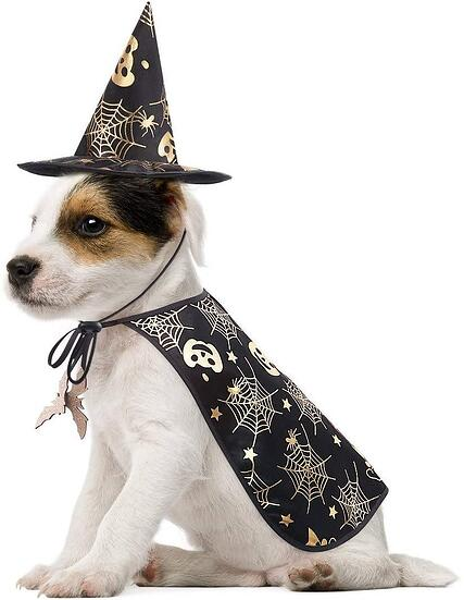 #11 Dog Wizard Halloween Costume