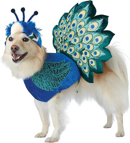 #22 Dog Peacock Halloween Costume