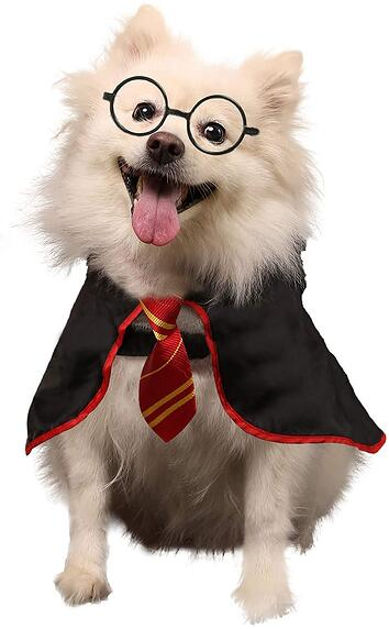 #23 Dog Wizard Potter Halloween Costume