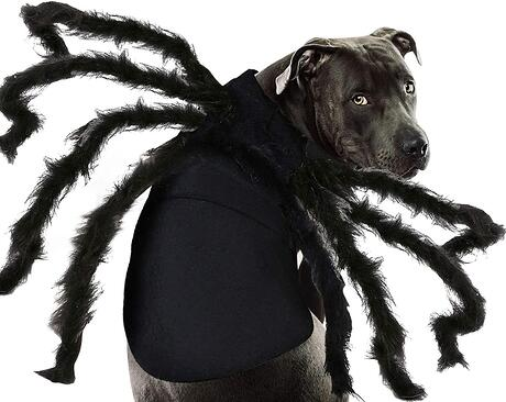 #7 Dog Spider Halloween Costume