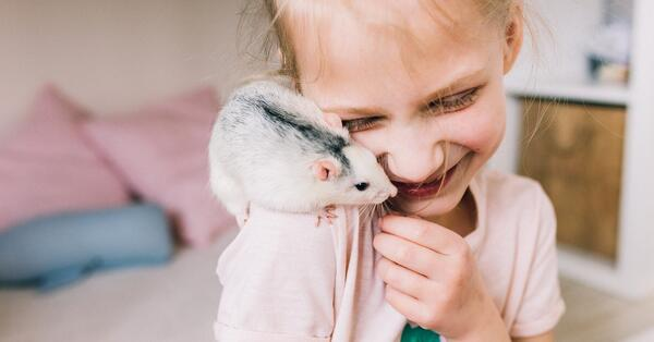 rats make great family additions