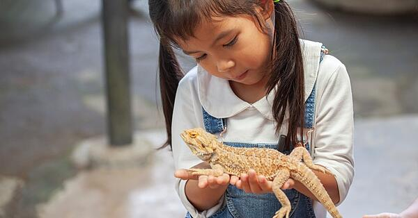 are lizards the best pets for young kids