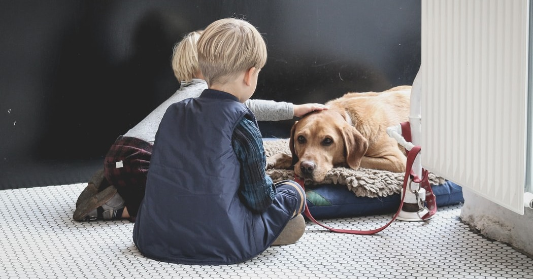 teaching children how to care for pets